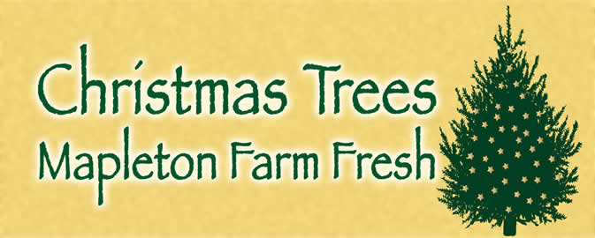 Johnson's Christmas Tree Farm