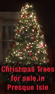 Christmas Trees for Sale in Presque Isle ME
